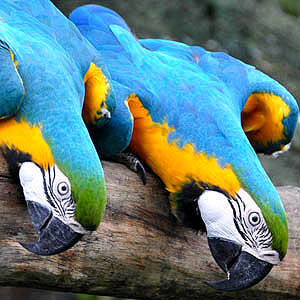 De zin en onzin van papegaaien