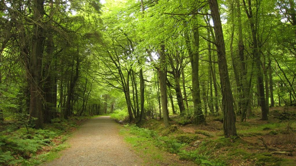 Als het even tegen zit en je door de bomen het bos niet meer ziet, coaching, zelfcoaching, geen nee zeggen, moeten, valkuil, dienstbaarheid, zelbewust, loslaten