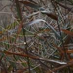 In je netwerk ben jij de spin in het web