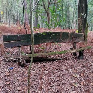 Een bankje in het bos leent zich uitstekend voor mindfulness