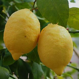 Tip juli 2018: Ruik eens aan een citroen