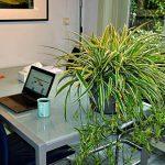 6 voordelen van groen op kantoor