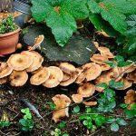 Zeg je herfst, dan zeg je paddenstoelen
